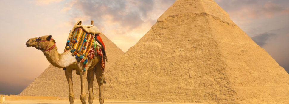 ☀ Camel Facts: True Facts About Camel