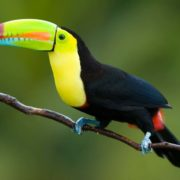 ☀Toucan Facts: True and Interesting Facts about Toucan